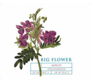 Big Flower - Merlot label