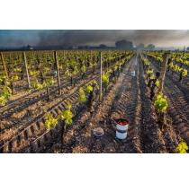 The 2021 Frost Could Impact Harvest, Distribution and What You Pay for French Wine