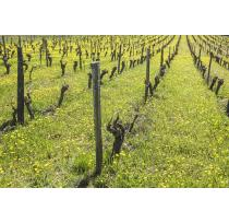 France Launches Official Natural Wine Certification